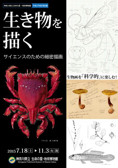 特別展「生き物を描く」~サイエンスのための細密描画~