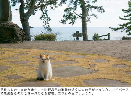 見晴し台へ向かう途中、与謝野晶子の歌碑の近くにこの子がいました。マイペースで無愛想なのになぜか気になる存在。三ツ石の主でしょうか。
