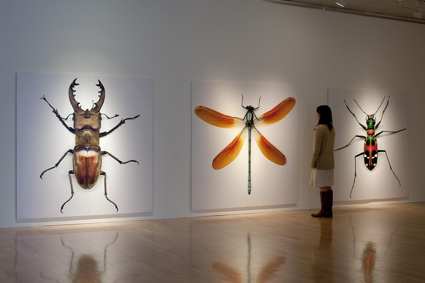 自然と美術の標本展 「モノ」を「みる」からはじまる冒険