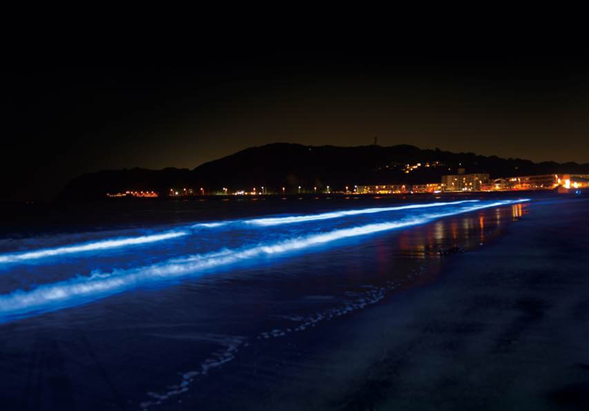 NIGHT WAVE - Light Wave Project