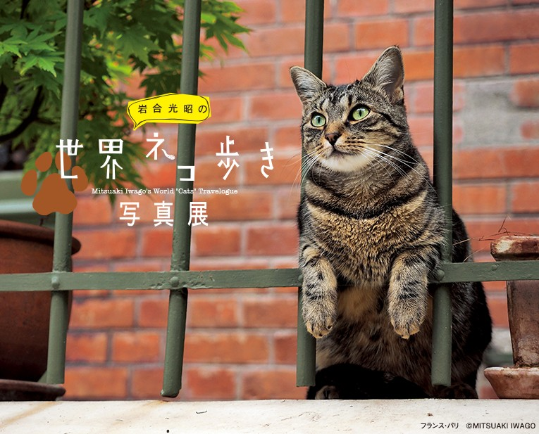 mitsuaki_iwago