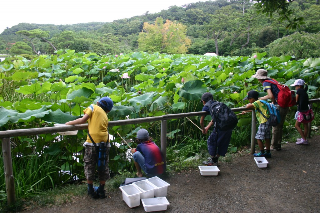 Experience Japanese culture with your children at Sankeien Garden. あそびい横浜 提供