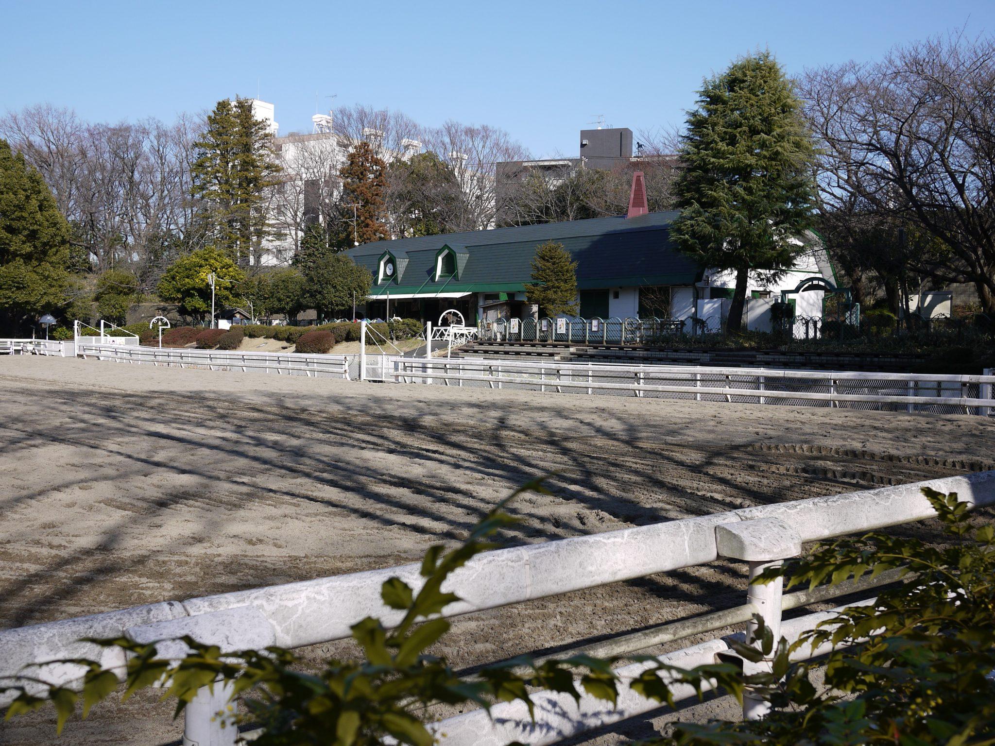 横浜で桜を親子で楽しむ根岸森林公園。あそびい横浜 提供