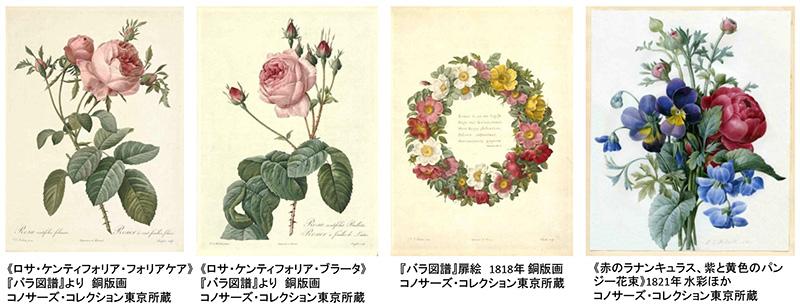 マリー・アントワネットとナポレオン皇妃ジョゼフィーヌが愛した宮廷画家 ルドゥーテの「バラ図譜」展