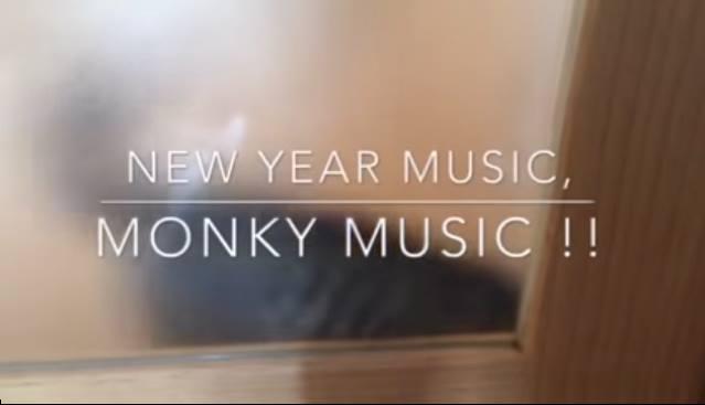 音楽フェス[NEW YEAR MUSIC, MONKEY MUSIC!!]