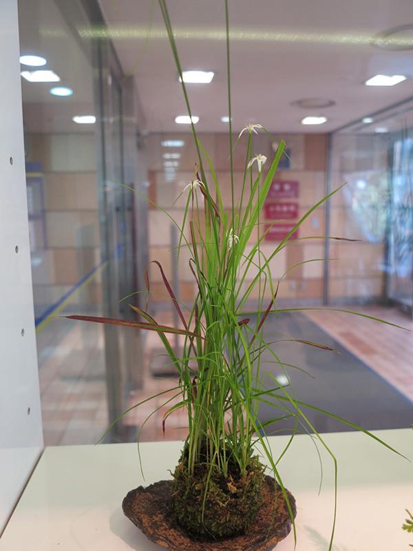 季節の苔玉を作ろう