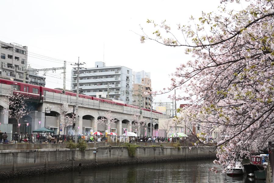 ワンデイバザール〜高架下桜まつり〜