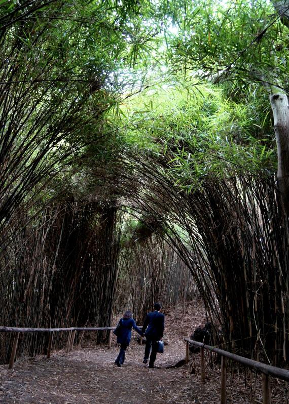 三溪園 新緑の古建築公開―シンボルの中を知る 重要文化財 旧燈明寺三重塔