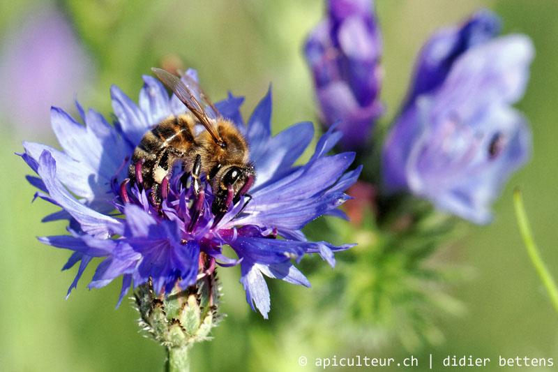 蜂蜜セミナー「蜂蜜のセラピー効果」