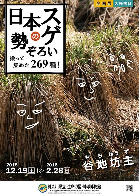 企画展「日本のスゲ勢ぞろい-撮って集めた269種!-」