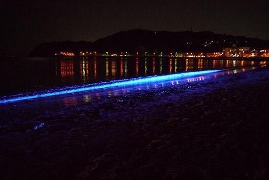 NIGHTWAVE~光の波プロジェクト~in逗子海岸