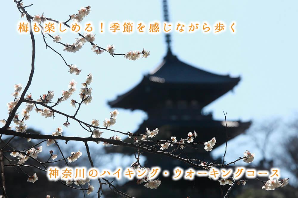 梅も楽しめる!季節を感じながら歩く、神奈川のハイキング・ウォーキングコース