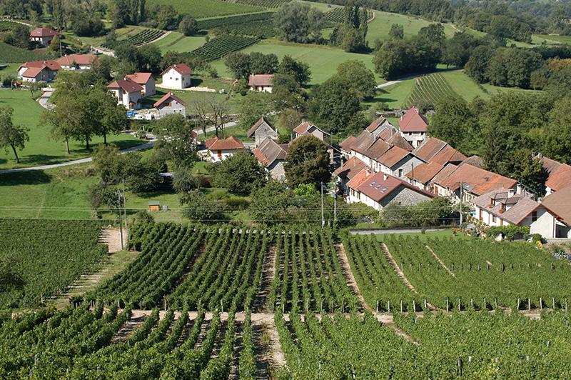自然派ワインセミナー