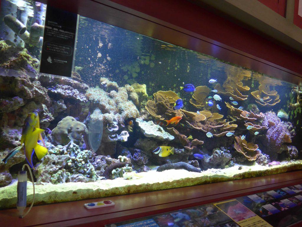 ヨコハマおもしろ水族館 赤ちゃん水族館