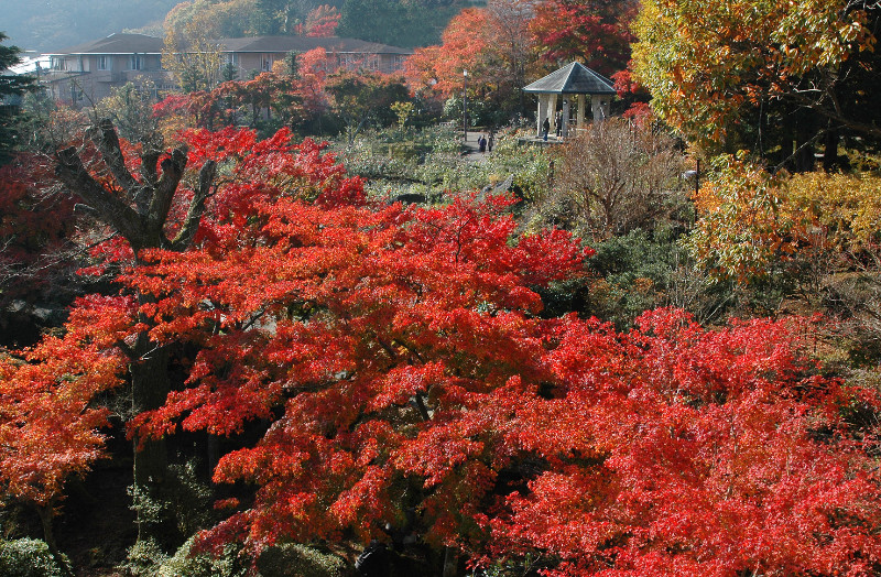 Gora, the popular tourist location where you can experience Hakone's seasons and onsen.