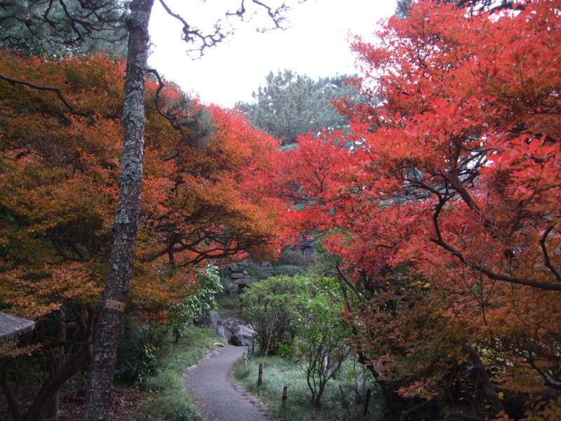 四季折々の風景も楽しめる!「松籟庵(しょうらいあん)」