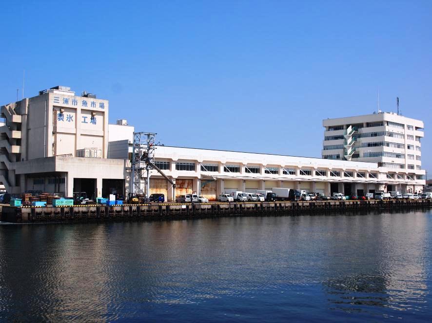 【マグロの競り】みさき魚市場(三浦市)