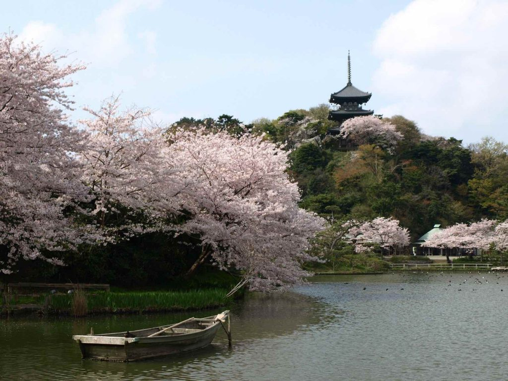 日本庭園「三溪園」で茶道体験<茶席・望塔亭>