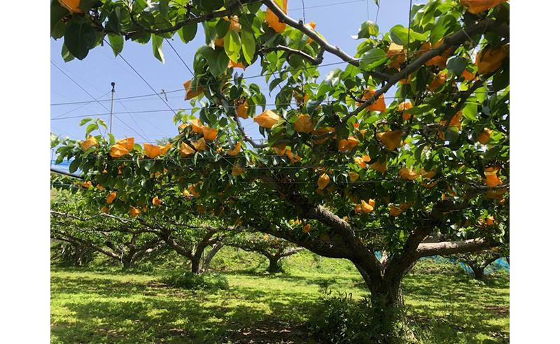 豊荘「果樹の里」