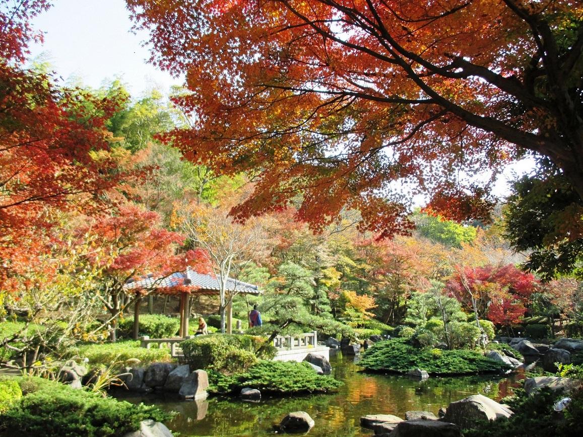 【大磯城山公園】四季折々の花木を楽しみ、展望台からの眺めを堪能