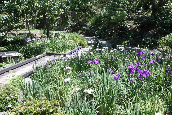 【大磯城山公園】享受四季不同的花草樹木,飽覽觀景台的風景