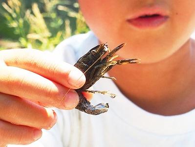 夏休み特別企画「自由研究ラボ~宿題だって楽しみたい!~」環境体験教室「和泉川・地蔵原の水辺で生き物観察会」