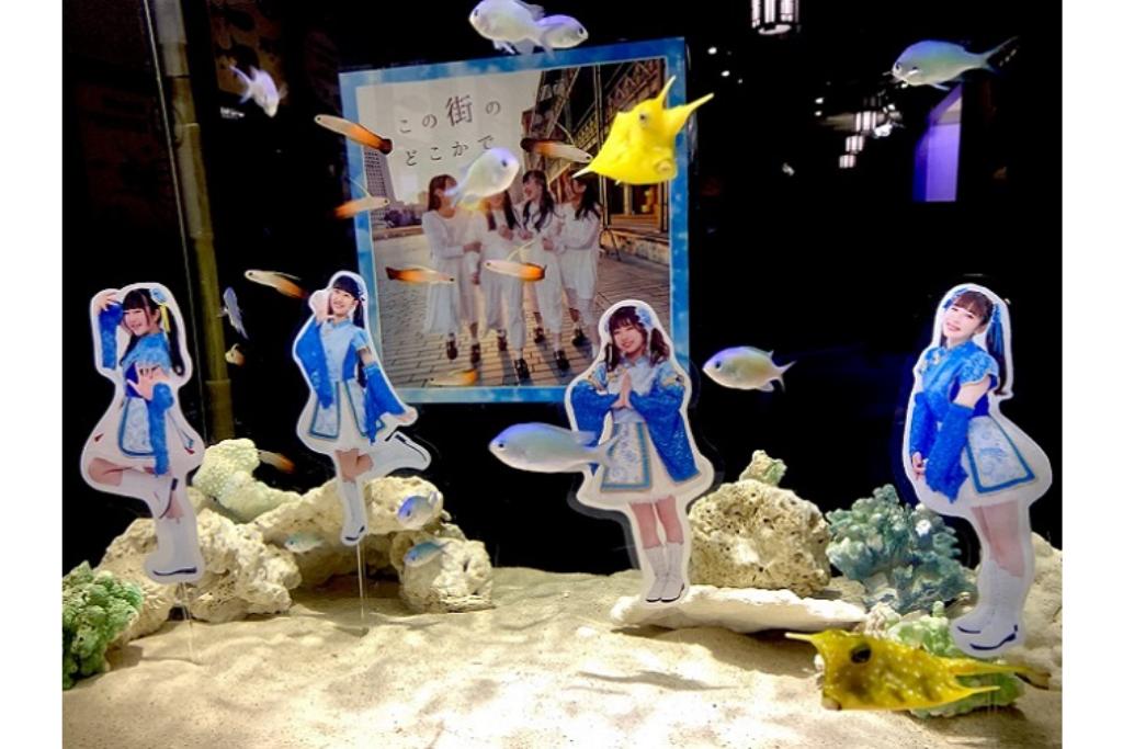横浜のご当地アイドル「横浜純情小町☆」とのコラボレーション水槽を展示