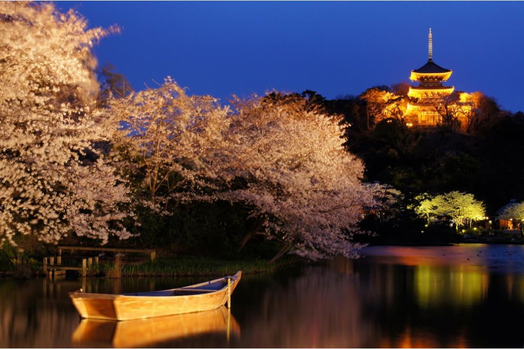 三溪園で観る、ライトアップで浮かび上がる夜桜