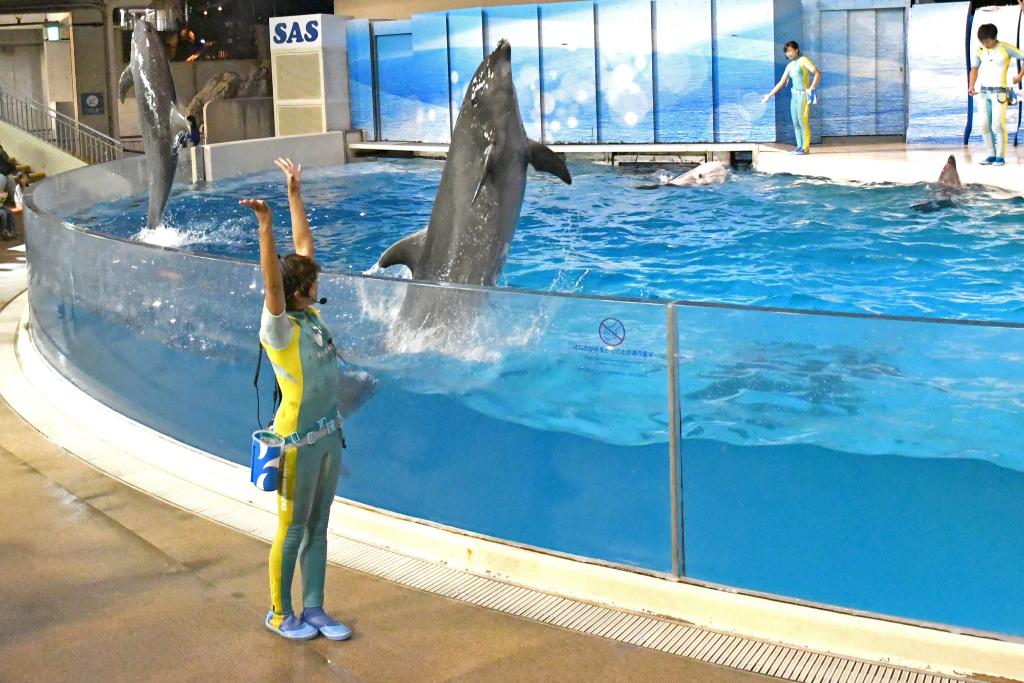 """""""えのすい""""のイルカやクジラたちの特別なパフォーマンスを楽しもう♪"""