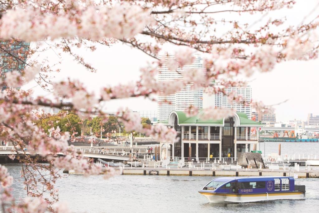 大岡川桜クルーズ 約600本の桜のトンネルをくぐる抜ける船上でお花見