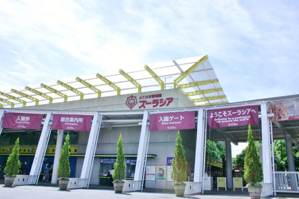【d】  KENSUKE TAKAHASHI アートワークショップ2020「14m×1.8m」の巨大作品展@よこはま動物園ズーラシア