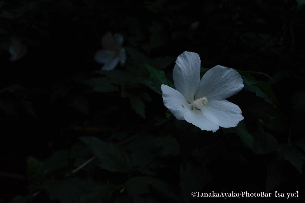 【a】  公募写真展作品募集 テーマは「花」