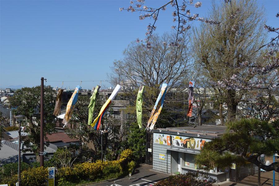 野毛山動物園 春の空を彩る!オリジナルこいのぼり「のげのぼり」が舞う♪