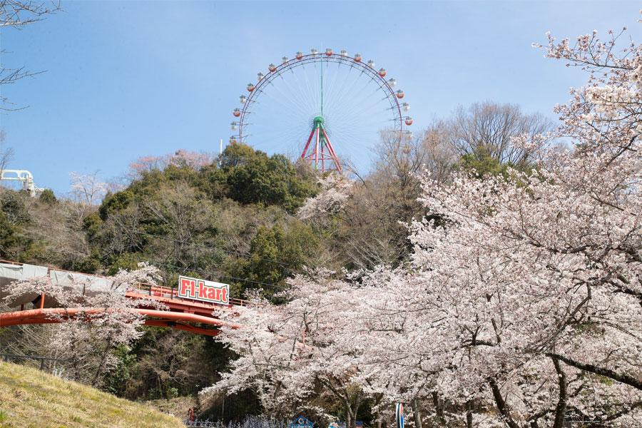さがみ湖リゾート プレジャーフォレスト まさに圧巻!100万枚の桜吹雪★「さがみ湖さくら祭り」開催