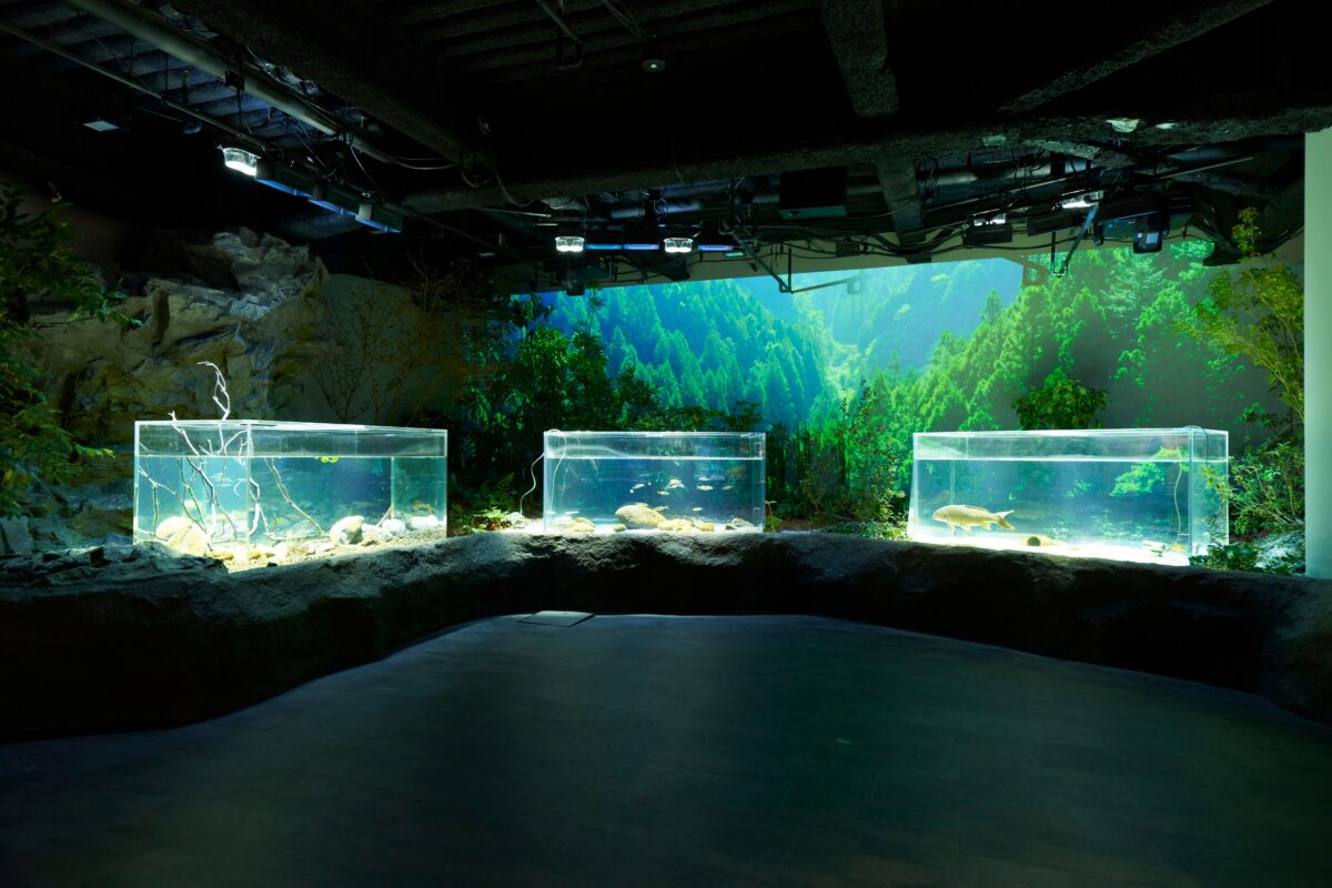 金ピカに輝く、カワスイ 川崎水族館 初の特別企画展。