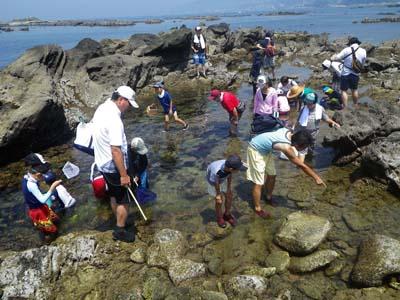 天然の水族館「潮だまり」でくらす生き物の観察をします。