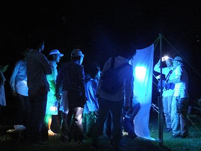 海岸の夜間昆虫調査をテーマとした観察会で、明かりに集まる昆虫や夜の砂浜を徘徊する昆虫等を観察します。