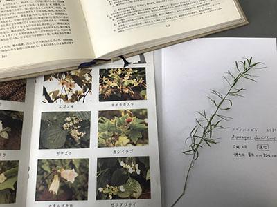 身近な植物の押し葉素材やシールを使って、自分だけの図鑑をつくりましょう。