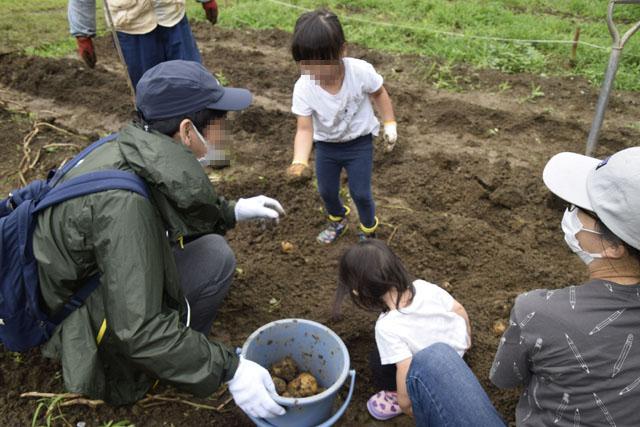 家族でジャガイモ掘りを楽しもう!